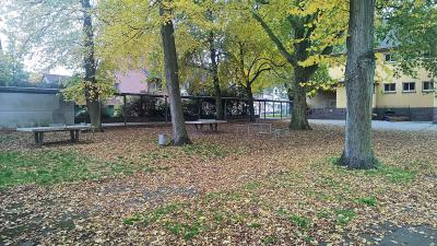 Sieben wertvolle alte Bäume müssen weichen, wenn die AWO ihr Verwaltungsgebäude an der ehemaligen Montessori-Schule baut Foto: nno.de