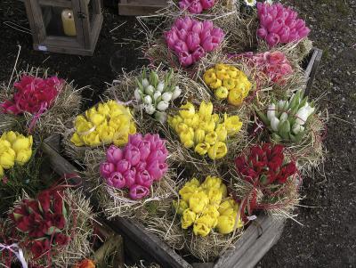 Mit Narzissen, Tulpen und Ranunkeln lässt sich der Frühling ganz einfach ins eigene Heim holen. Foto: Reno Müller