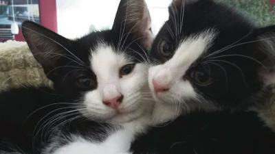 Man mag sich gar nicht vorstellen, dass diese niedlichen Katzen eventuell eingefangen werden, um an ihr hübsches Fell zu kommen. Foto: privat