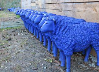 Blaue Schafe von Rainer Bonk
