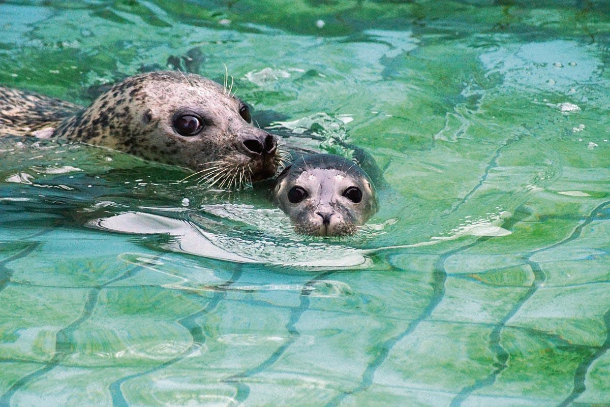 Tiergarten Kleve Seehund