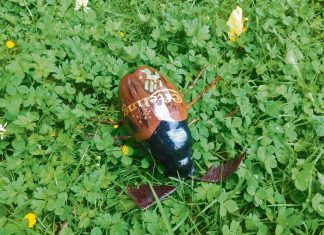 Käfer Efteling
